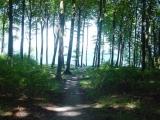 Waldweg bei Gegenlicht