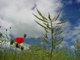 Nahaufnahme einer Wiese und Wolkenhimmel